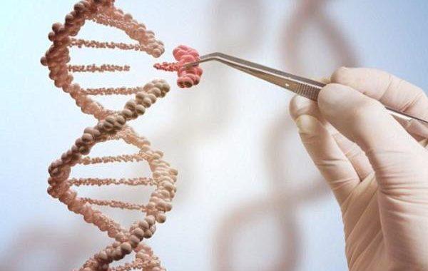 سبک زندگی ژنها را تغییر میدهد
