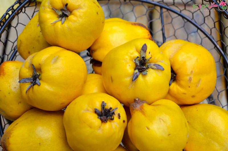 خواص درمانی میوه به
