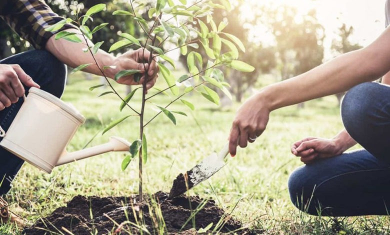 آموزش کاشت نهال به مناسبت روز درختکاری