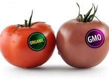 موفق ترین محصولات و میوه های تراریخته (GMO)!